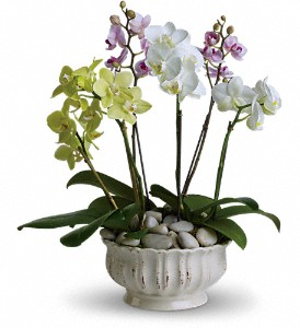 Teleflora Opulent Orchids plant in Auburndale, FL | The House of Flowers