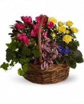 Teleflora's Blooming Garden Basket