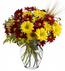 Teleflora's Fall For Daisies  Vase arrangement
