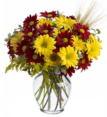 Teleflora's Fall For Daisies  Vase arrangement