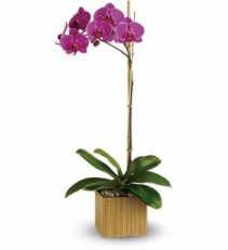 Teleflora's Imperial Purple Orchid Cubed Arrangement
