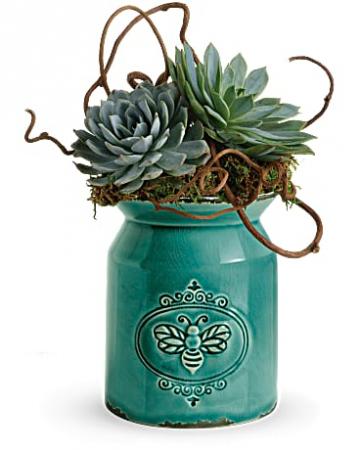 Teleflora's Living Love Garden Live Succulents in Stoneware container