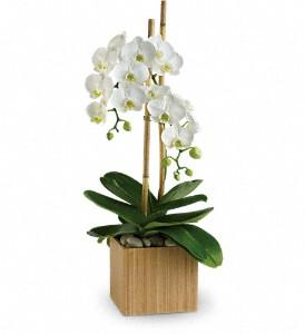 Teleflora's Opulent Orchids Cubed Arrangement