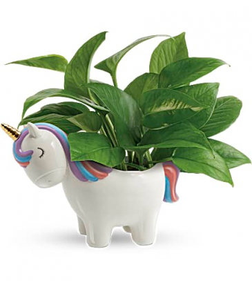 Teleflora's Peaceful Unicorn Pothos Plant