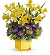 Teleflora's Playful Springtime Daffodil Bouquet