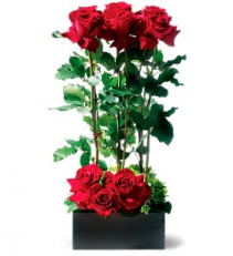 Scarlet Splendor - 914 Arrangement