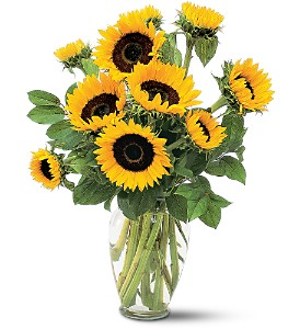 Teleflora's Shining Sunflowers  in Livermore, CA   KNODT'S FLOWERS