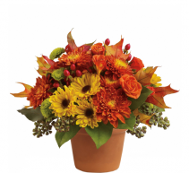 Teleflora's Sugar Maples  Fall arrangement
