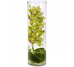 Zensational Cymbidium Orchids - 447 Vase Arrangement
