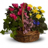 Telelfora blooming basket custom based on seasonal plants