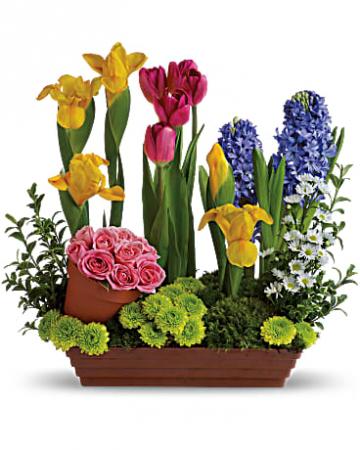 Telelfora's Spring Favorite Spring Flowers
