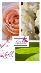Tender Grace Designers Choice - Vase Arrangement