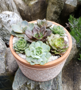 Terracotta Succulent Planter