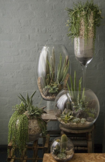 Terrarium Decor Plant