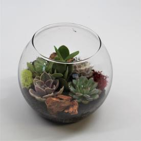Terrarium Dream  Succulent Garden