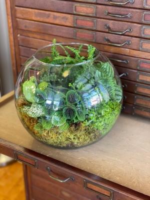 Terrarium Plant in Du Bois, PA | BRADY STREET FLORIST