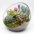 Terrarium Succulent