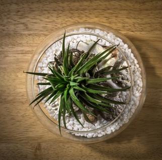 Terrariums & Succulents Plants & Terrariums