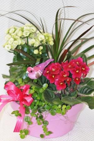 Blooming Dish Garden Fitzgerald Flowers Design in La Grande, OR | FITZGERALD FLOWERS
