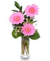 Thank You Blooms of Pink Gerberas