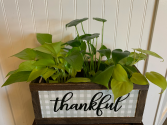 Thankful  planter