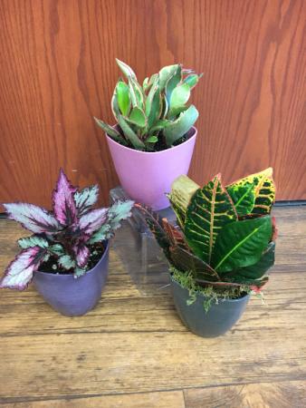 Dorm Room Plant Plant