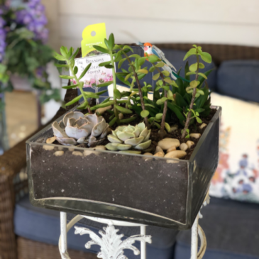 The Succulent Forest Dish Garden