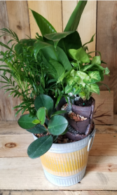 The Bucket Garden plants
