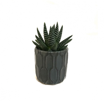 The Charcoal Mini Succulent Planter