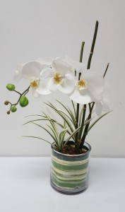 The Commercial Orchid Commercial