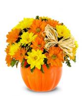 The Daisy Pumpkin Patch