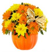 The Daisy Pumpkin Patch Arrangement