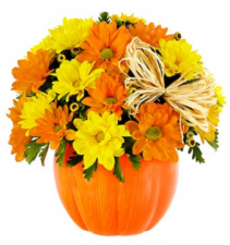 The Daisy Pumpkin Patch Arrangement
