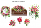 The Divine Tribute  Sympathy