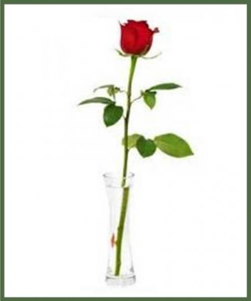 The Elegant Single Rose Your Choice of Color