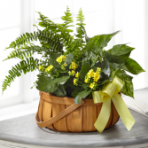 The FTD Always Dear Dishgarden Green Plant