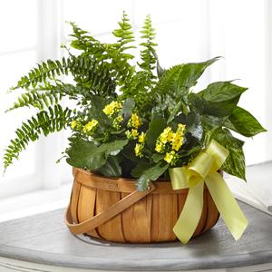 The FTD Always Dear Dishgarden Green Plant
