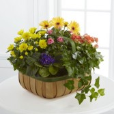Gentle Blossoms Basket is a wonderful wa Plants Basket