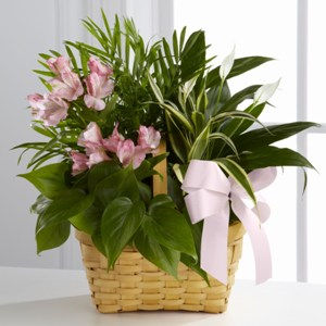 The FTD Living Spirit Dishgarden Blooming Plant Basket