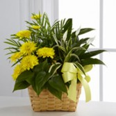 Loving Light Dishgarden  Plant Basket