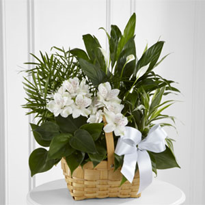 The FTD® Peace & Serenity™ Dishgarden Dishgarden