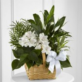 Peace & Serenity Dishgarden Plants Basket