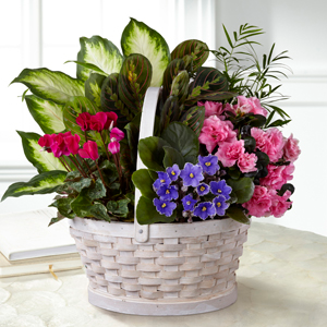 The FTD Peaceful Garden Planter Blooming Plant Basket