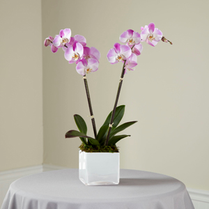 The FTD® Pink Orchid Planter Orchid Planter