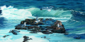 The Gull Rocks Maberly Ed Roche Prints