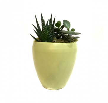 "The ""Hello Yellow!"" Succulent Planter"