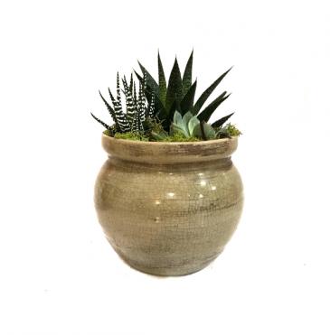 The Honey Pot Succulent Planter