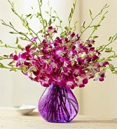 The Orchid Vase Just Because