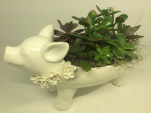 The Pig Planter  in Troy, MI | ACCENT FLORIST