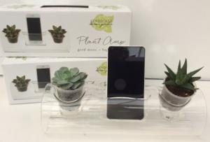 The Plant Amp!  in Troy, MI | ACCENT FLORIST
